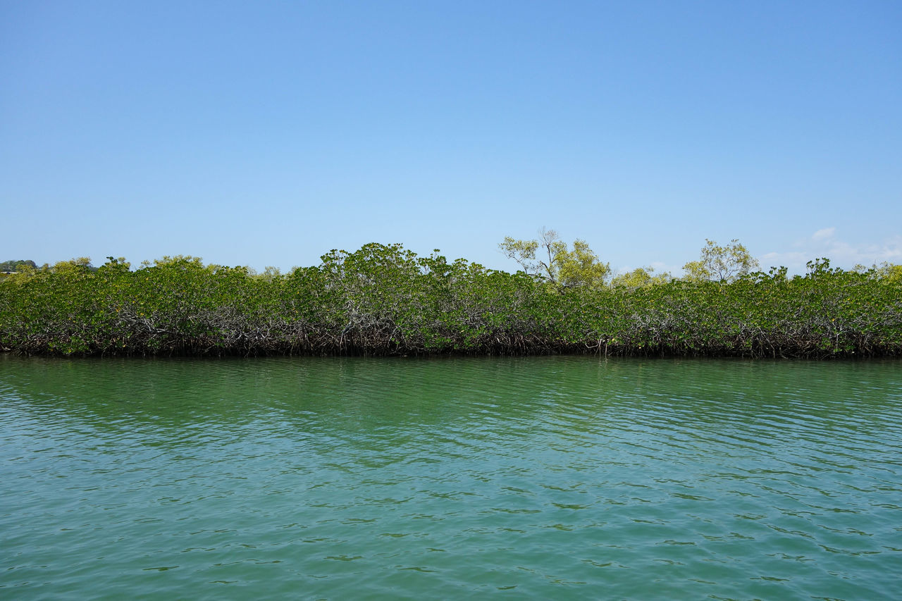 Mangrove Forest In River Against Blue Sky