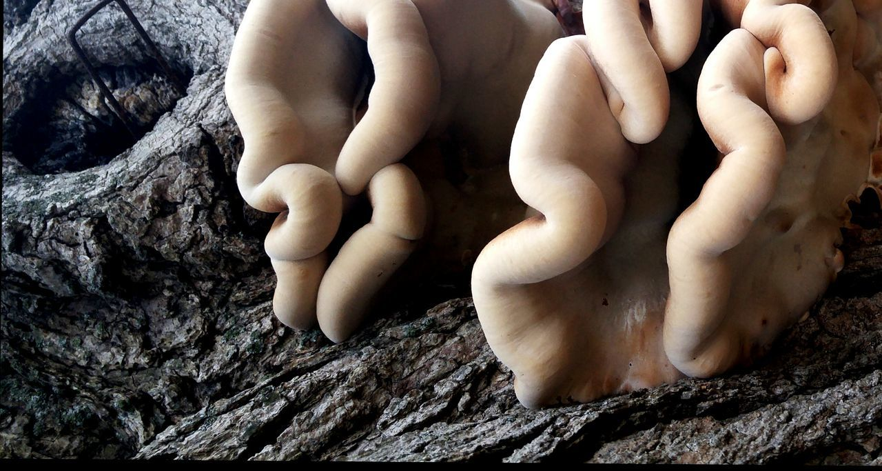 creepy looking growth on a tree in Kentucky Scifi Oddbeauty Close-up Tree Nature Fungus Oddity Maximum Closeness Science Fiction Scifi Art