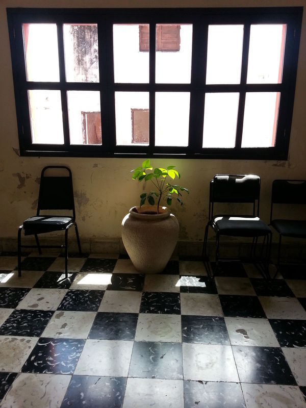 Chair Day Empty Furniture Green Color No People Plant Potted Plant Pottery Seat Tam_anc Window