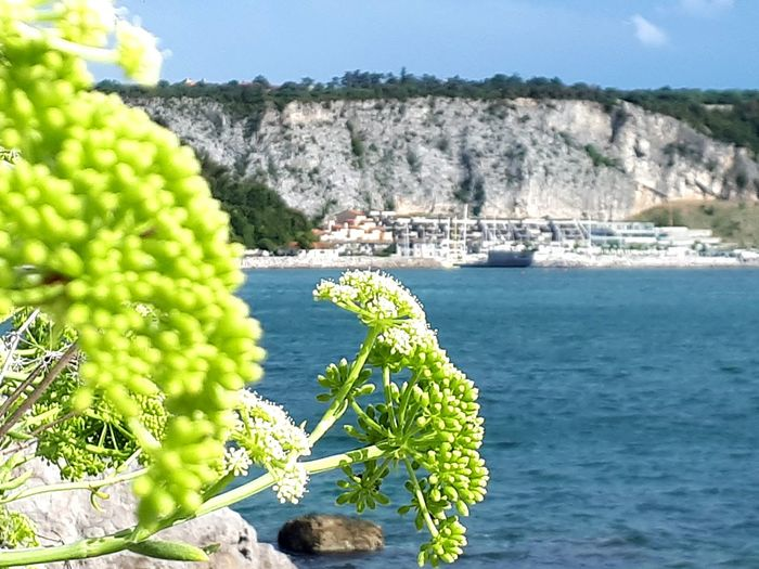Sunny Outdoors Day Landscape Nature No People Plant Sky Sunlight Tree Mountain Water Beauty In Nature Sea View Bay View Nautical Scene Natures Diversities Portopiccolo Portopiccolosistiana Green Color Blue Sea Beach