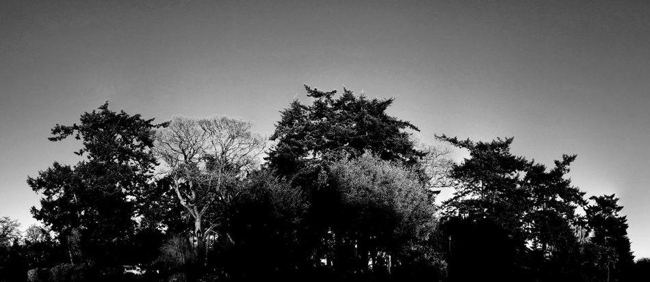 Panorama of a variety of Trees Nature Blackandwhite Largerthanlife