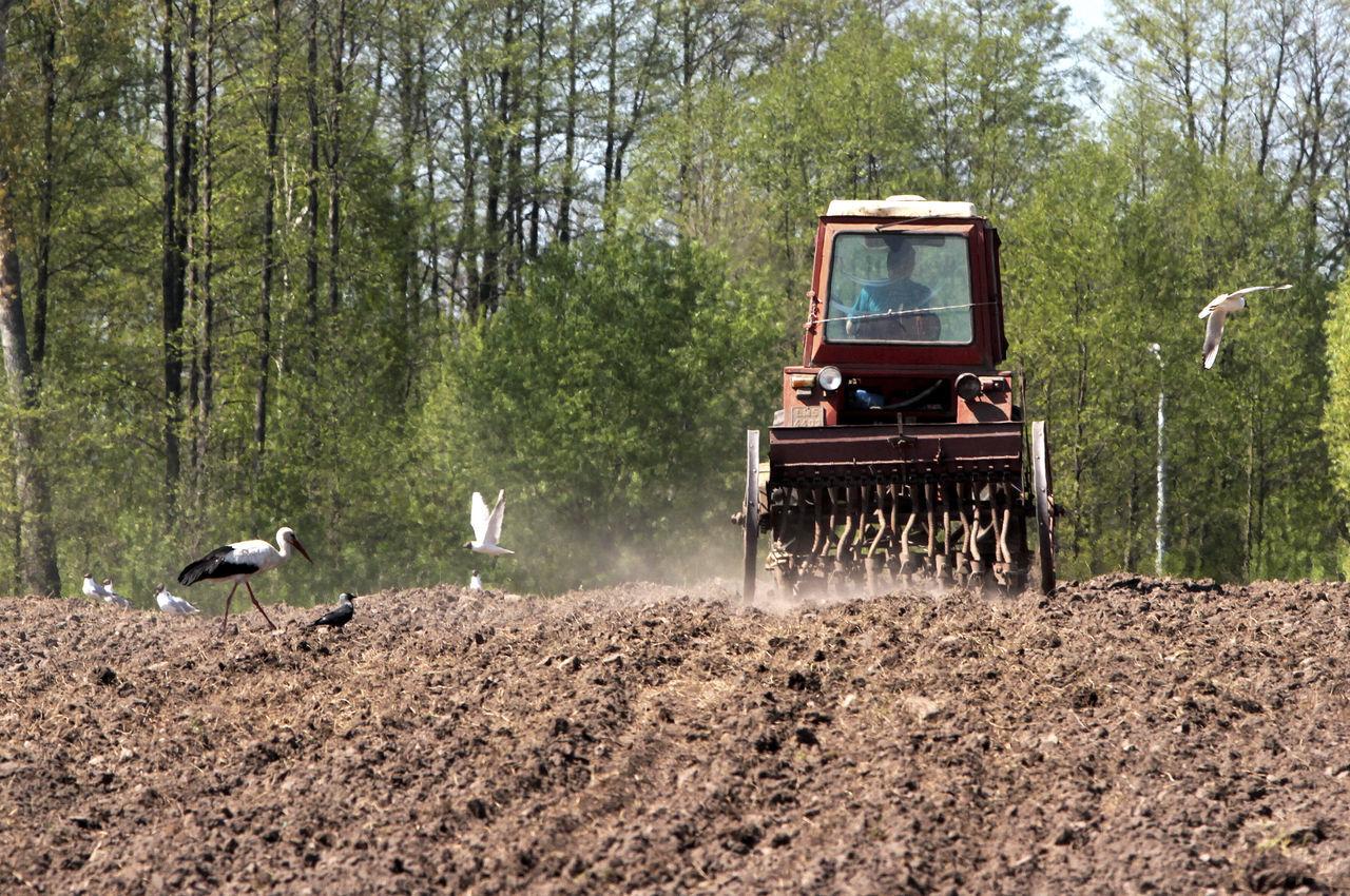 Agriculture Biebrza Biebrza National Park Bird Farmer's Life Plowed Field River Rural Scene Stork Tractor