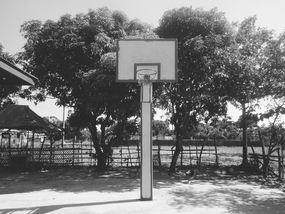 it's not easy to take good photos sorry... #basketball  #EyeEmBestShots #EyeemPhilippines Day Growth Information Information Sign Nature No People Outdoors Pole Sky Tranquil Scene Tranquility Tree