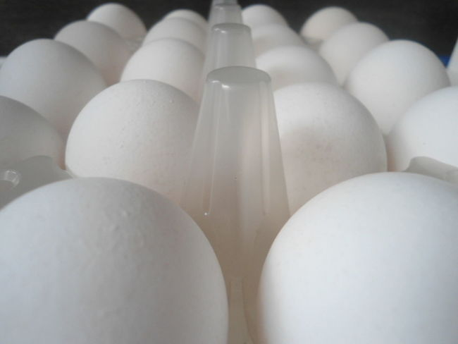 Close-up van doos witte eieren. Lot Of Eggs For Egg Diet Protein Breakfast First Eyeem Photo Close - Up Box Of White Eggs Plastic Box Eggs For Diet Eggs In Plastic Box Close-up Close Up Makro Closeup Eggs For Egg Diet
