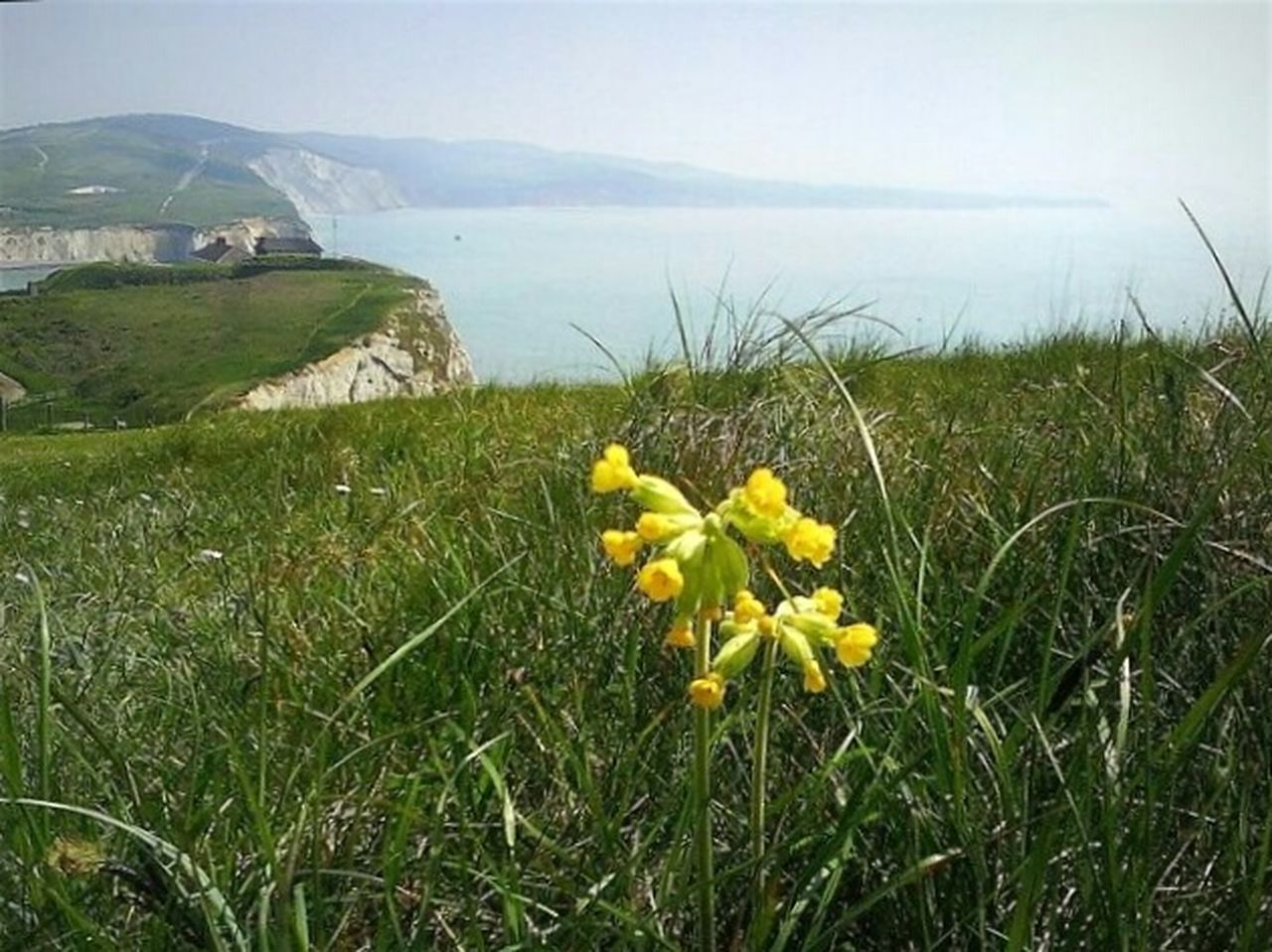 Primrose Cliffs And Water Isle Of Wight
