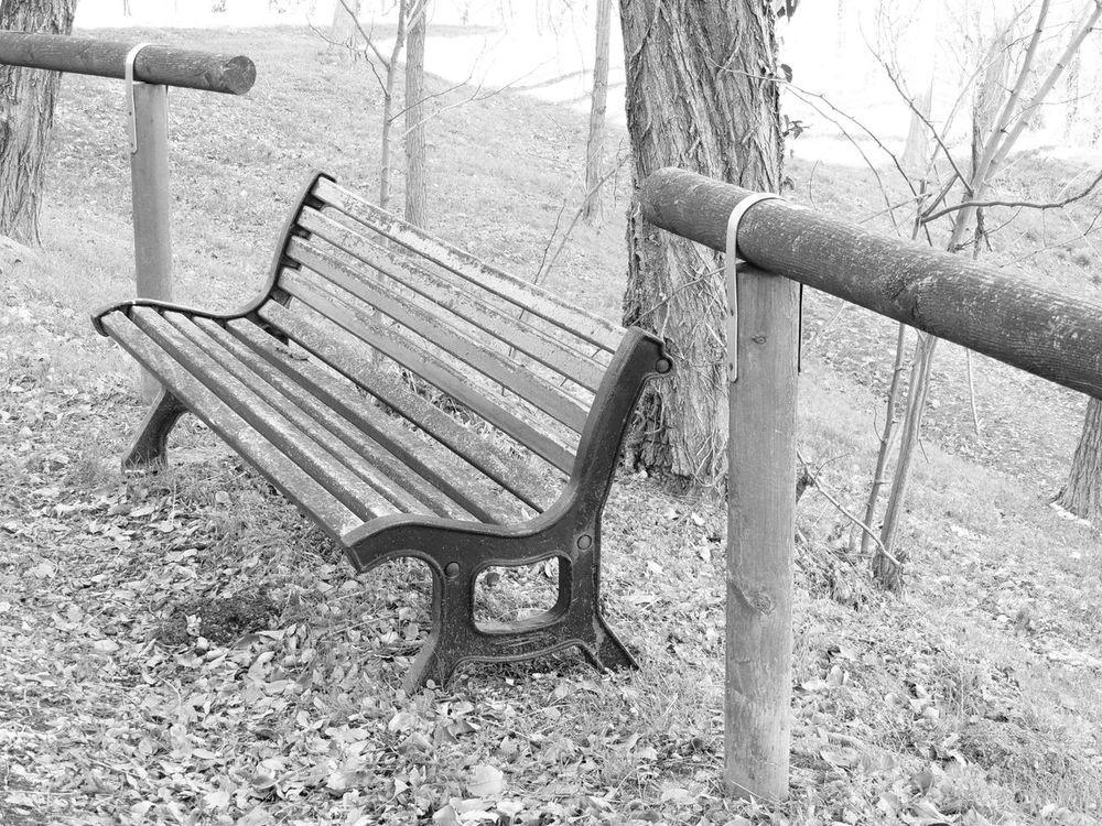 Bench Seat Day Metal Nature No People Outdoors Panchina Panchinavuota Sand Swing Tree