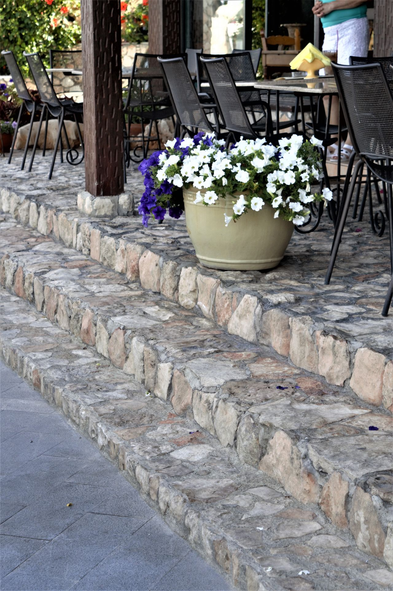 Architecture Building Exterior Built Structure Day Flower Fragility Growth Larnaka Cyprus Nature No People Outdoors Plant Potted Plant