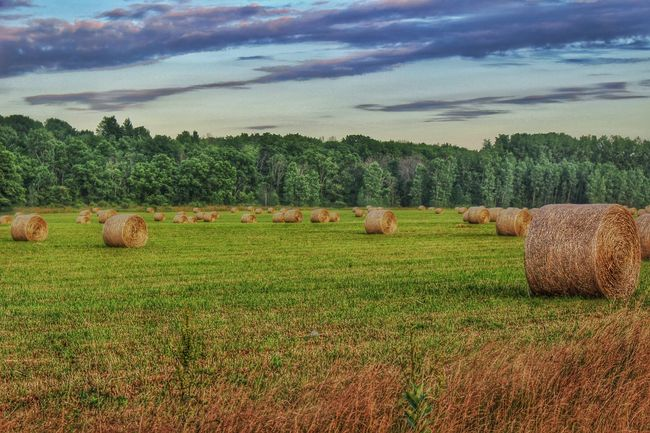 Spring hay rolled into Bales Agriculture Bale  Beauty In Nature Cloud Cloud - Sky Crop  Cultivated Land Farm Field Grass Growth Hay HDR Horizon Over Land Idyllic Landscape Nature No People Outdoors Rolled Up Rural Scene Scenics Sky Tranquil Scene Tranquility First Eyeem Photo