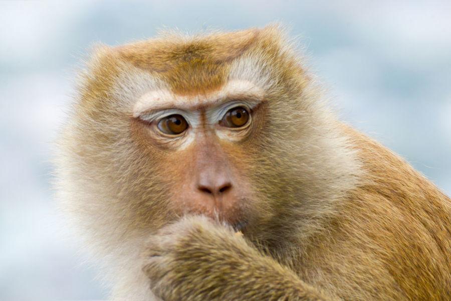 monkey Animal Wildlife Brown Close-up Cute Eye Face Look Mammal Monkey Nature One Animal Outdoors Park