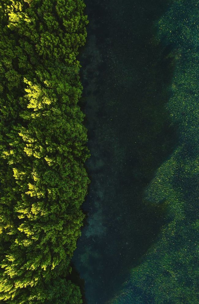 🌿The mangroves of north creek🌴~ Beauty In Nature Growth Tree Water Sky Outdoors Nature Mangroves Paradise Calm Overhead View High Angle View A Bird's Eye View