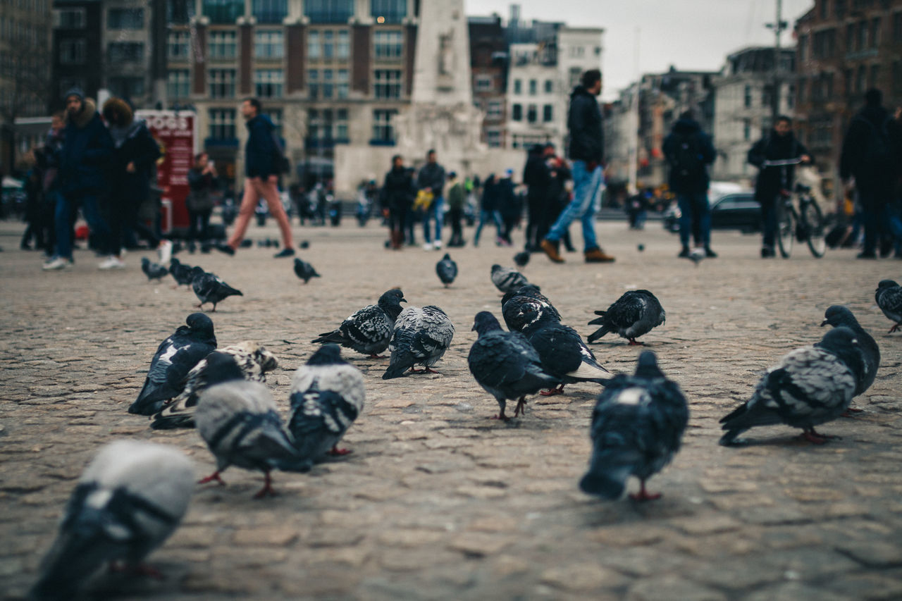 Beautiful stock photos of hühner, Amsterdam, Animal Themes, Animal Wildlife, Animals In The Wild