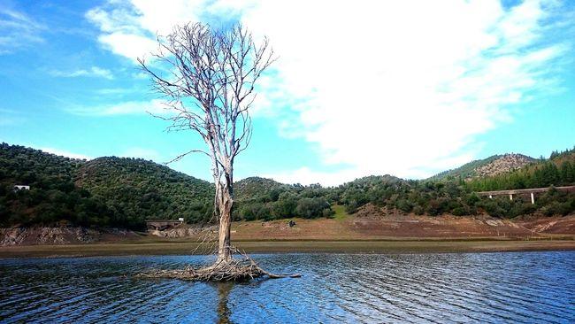Lago Agua Arboles , Naturaleza ArbolSeco Paisaje Nature Photography Naturaleza🌾🌿 Sony Z2 Photography