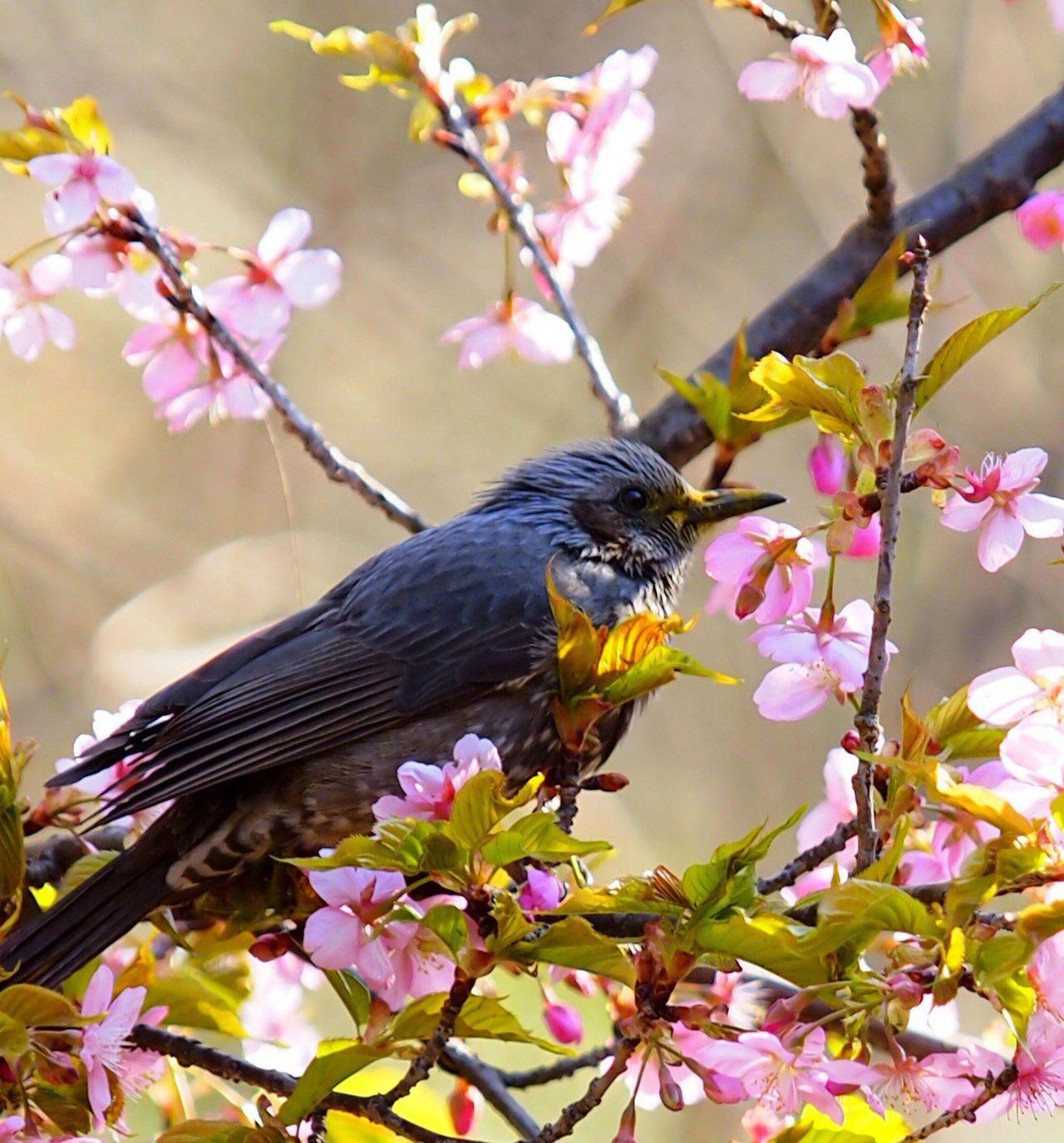 EyeEm Birds Bird Bird Of Tokyo Birds Pmg_tok