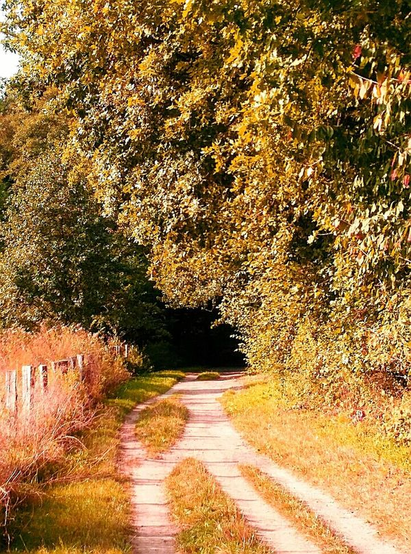 Nature Reserve Langenfeld Rheinland The Way Forward Landscapes Beauty In Nature Nature Change Season  Autumn Impression Season  Naturelovers Outdoors Nature Nature Photography No People Footpath Landscape_photography The Way Forward To Country Roads