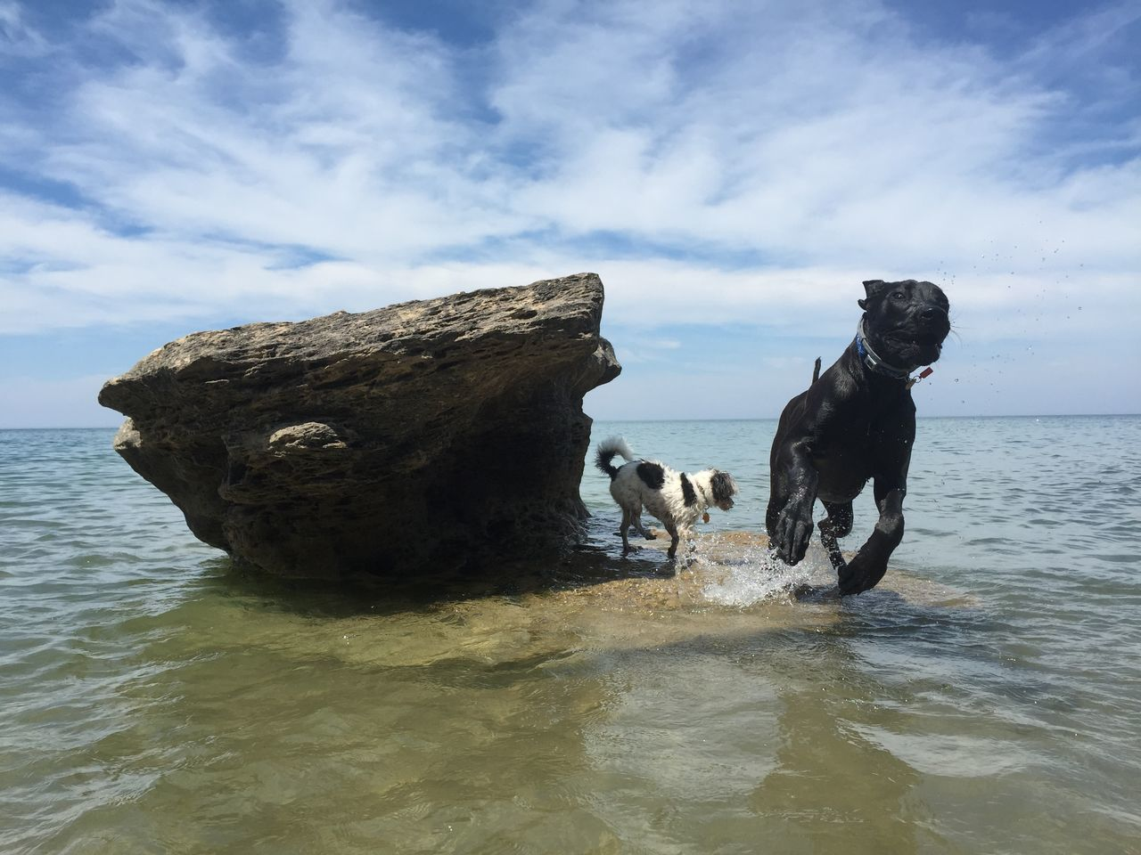 Leap Dog EyeEm Best Shots - Nature IPhoneography Taking Photos The Purist (no Edit, No Filter) Dogs I Love My Dog Summer Dogs Beach Fun EyeEm Nature Lover Michigan My Best Photo 2015