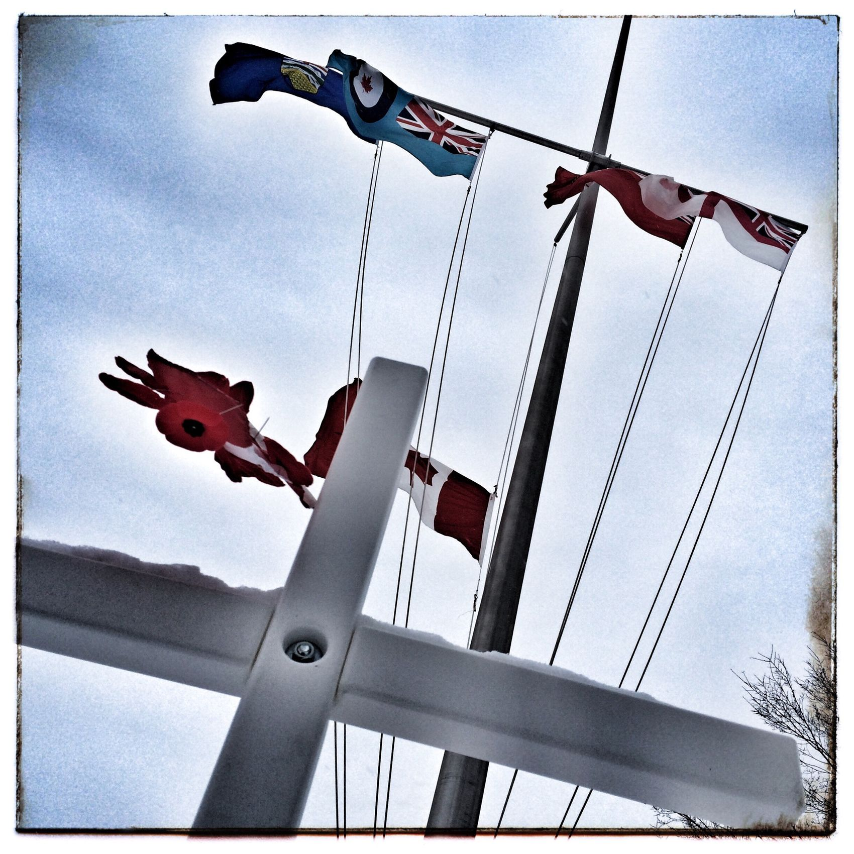 Waiting for Remembrance Day service to begin. Photography Photo Of The Day Remembrance Iphone 5