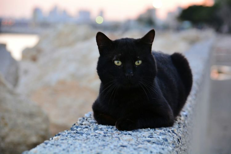Thecat Catlife The Animals Condition Check This Out Relaxing Hi!