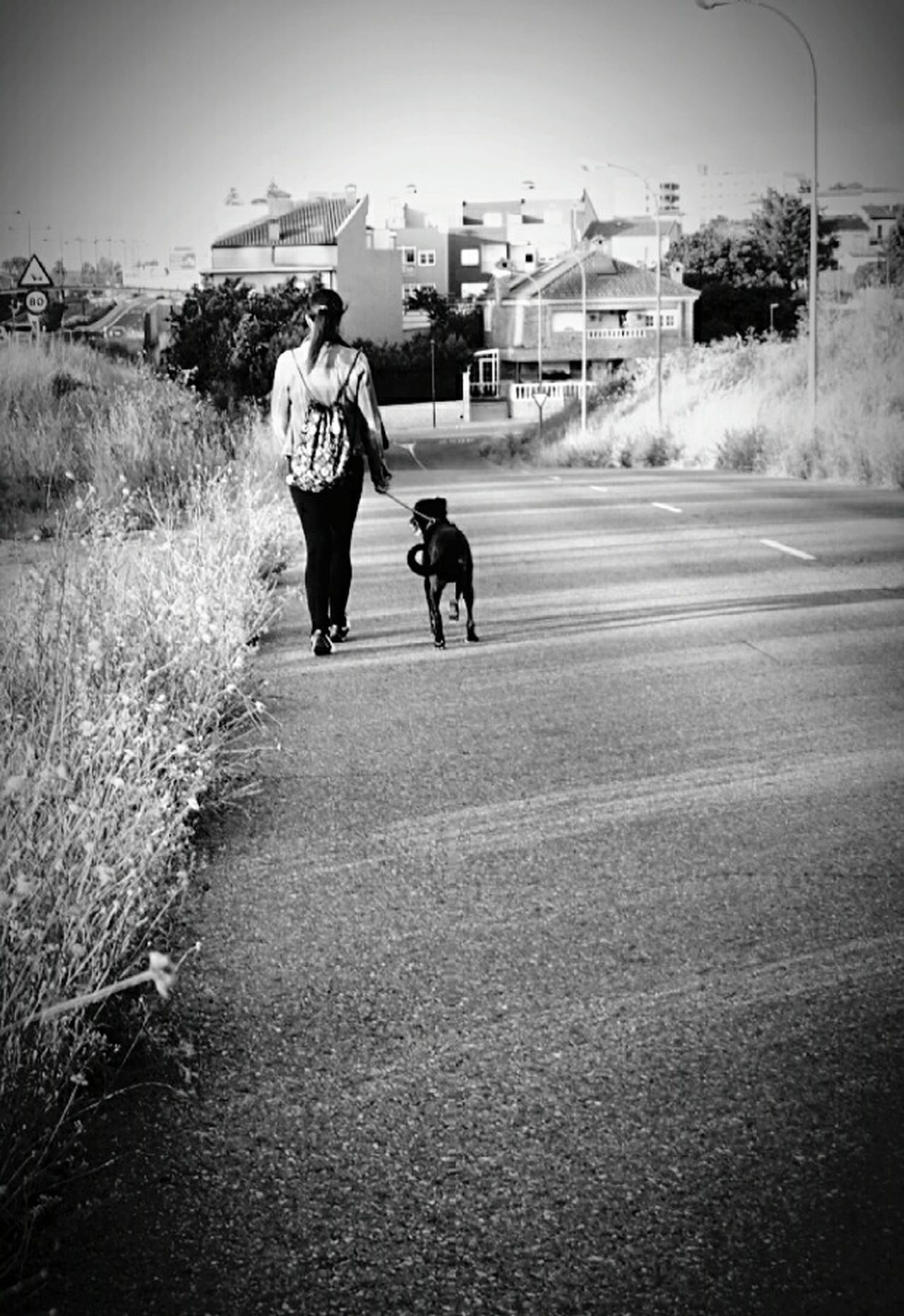 Taking Photos Photography Eye4photography  Getty Gettyimages EyeEm Nature Lover EyeEm Best Shots EyeEm Gallery Getty X EyeEm The Street Photographer - 2016 EyeEm Awards The Great Outdoors - 2016 EyeEm Awards Black And White Blackandwhitephotography Black And White Photography Blackandwhite Photography Animal_collection I Love My Dog Dogs Of EyeEm Perros Por El Mundo Dog❤ Dog Live Blackandwhite Dogs Animal Photography Perros
