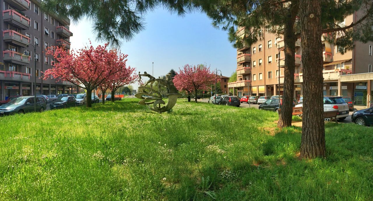 Urban Geometry Urban Spring Has Arrived Nature_collection Urban Nature Trees Building Spring Springtime