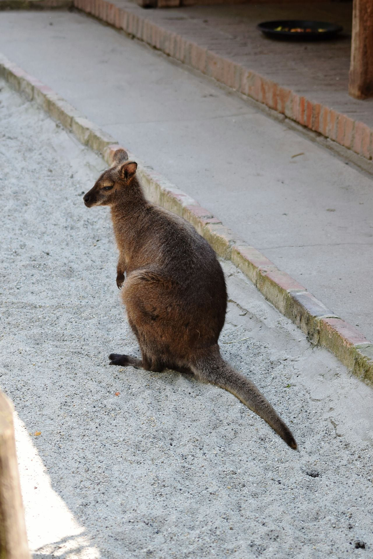 Zoo Zoo Budapest Kangaroo Kangoo Aussie Aussie Icon Watching EyeEm Gallery EyeEm Nature Lover