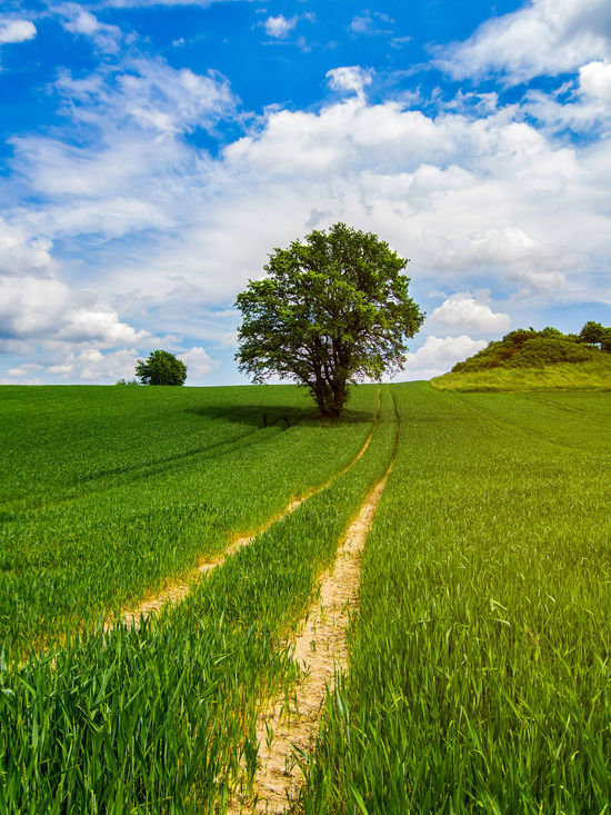 Nice big tree on a field. Green Color Hiking Agriculture Beauty In Nature Cloud - Sky Day Farm Field Grass Green Color Growth Landscape Nature Nature_collection No People Outdoors Plant Rural Scene Scenics Sky Summer Tranquil Scene Tranquility Tree Walking In The Park