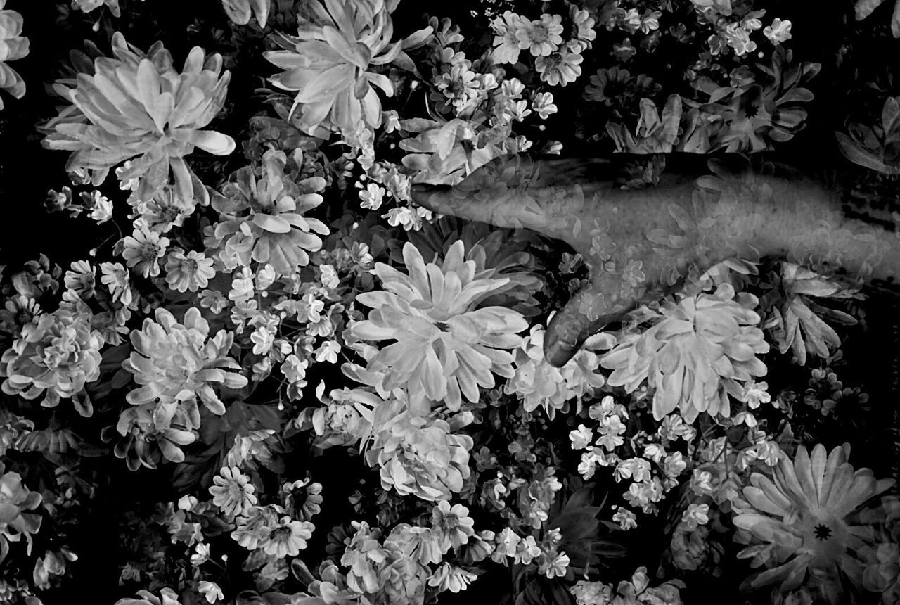 B&wphotography Monochrome B&W Collective Black And White Portrait Blackandwhitephotography Black And White Photography Blackandwhite Photography B&W Portrait B&W Collection B&w Photography B&W_collection Black And White Collection  EyeEm Best Shots - Black + White B&w Photo B&W Collections Black & White Black Black And White Blackandwhite Black&white Flowers Flower