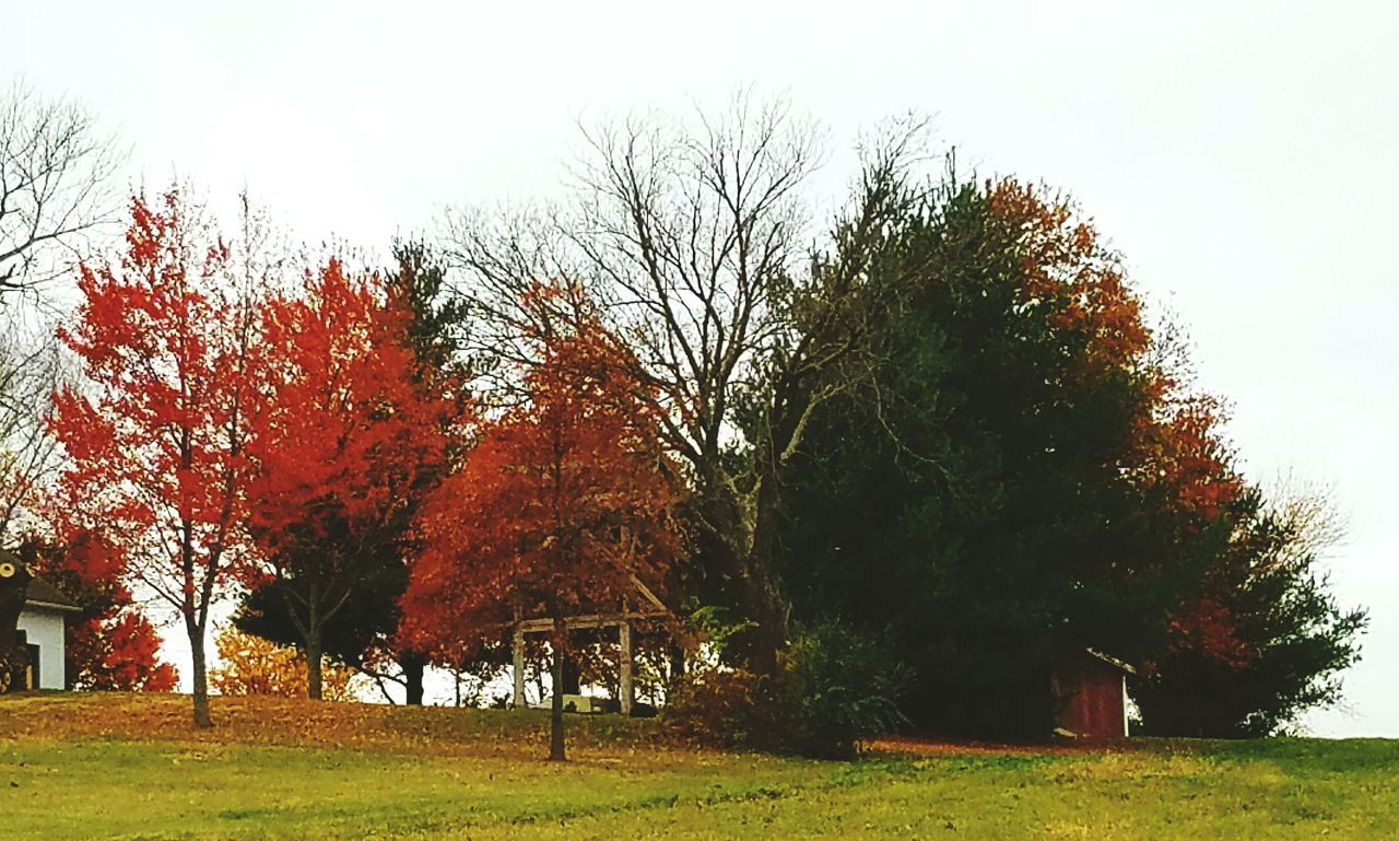 Changing seasons in the country Tree Nature Growth No People Sky Outdoors Beauty In Nature Cloud - Sky Day Samsung Galaxy S7 Edge Landscapes Green Color Backgrounds Eye4photography  Landscape