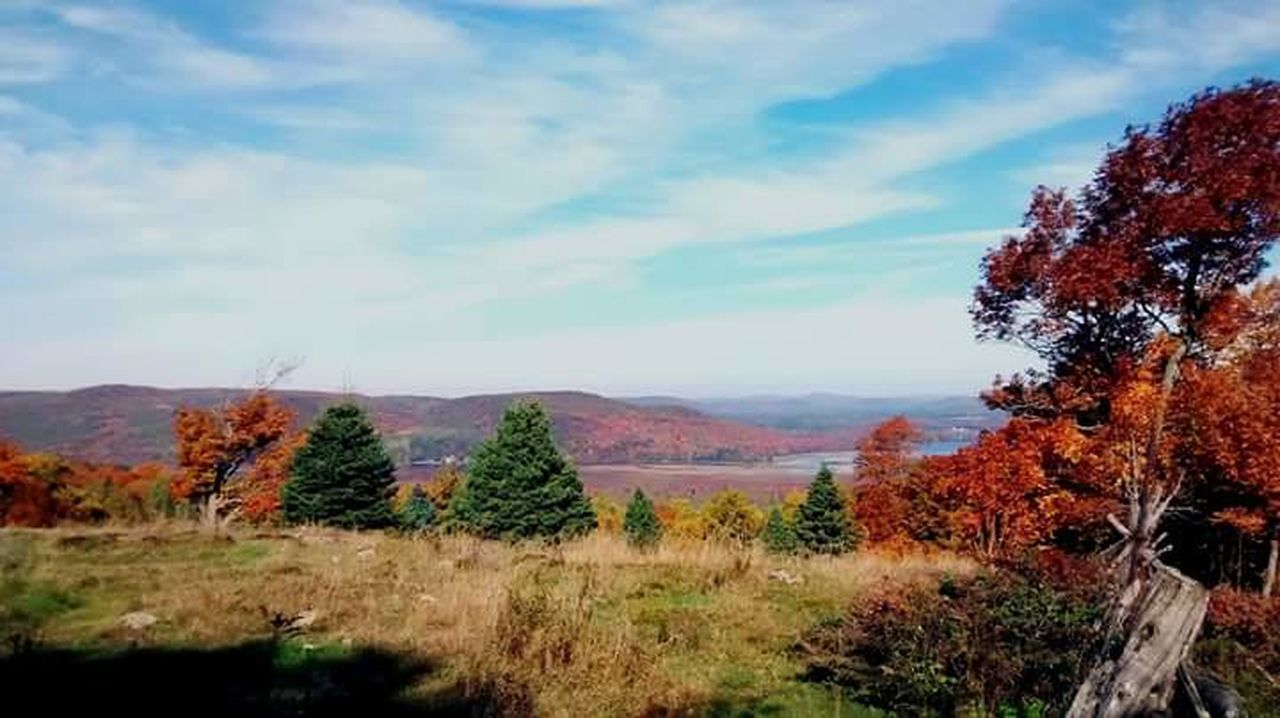 autumn, tree, landscape, nature, sky, change, beauty in nature, tranquility, mountain, scenics, tranquil scene, field, no people, day, growth, outdoors