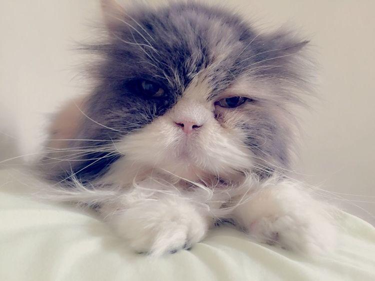I Love My Cat Cat Lovers I Love My Cats  Cat Cat♡ Cats Lovecats❤️ Brasil ♥ Hello World Love