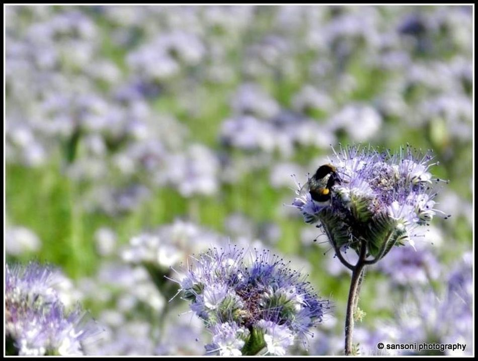 Nature EyeEm Nature Lover Bumblebee Flowers