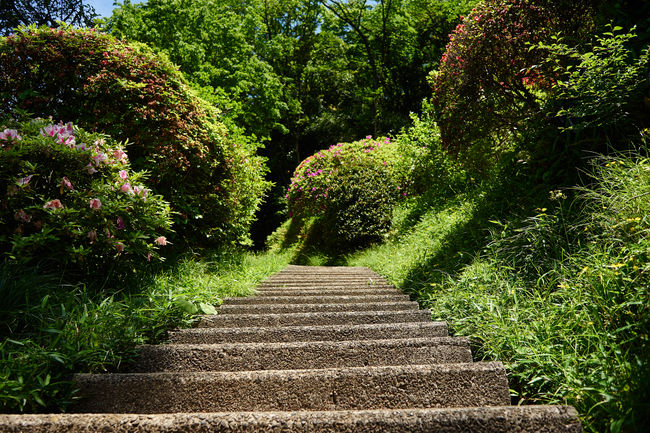 Beauty In Nature Green Green Green Color Growth Nature Plant Staircase Stairs Stairways Steps Stone The Way Forward