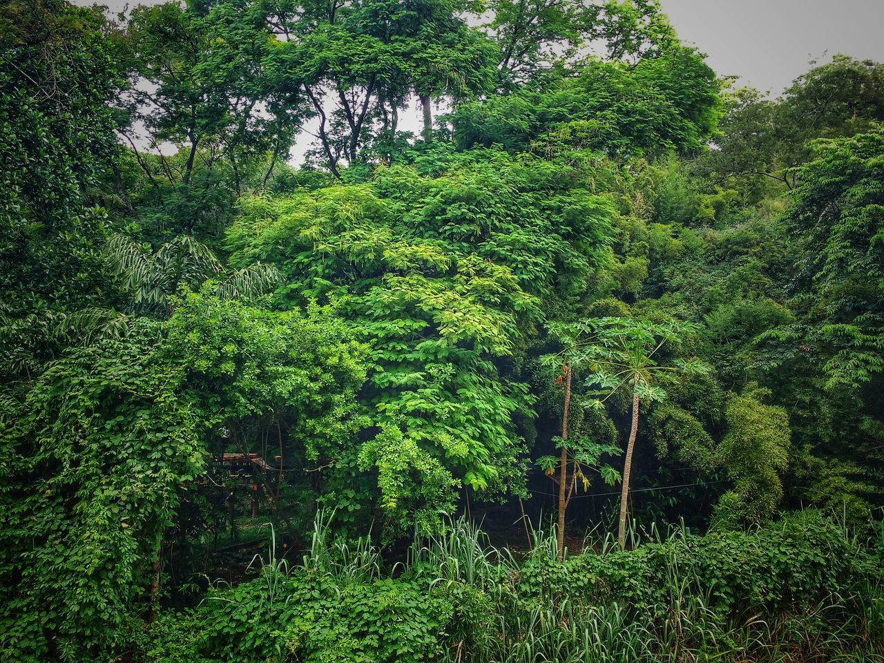 Growth Green Color Nature No People Tree Beauty In Nature Tranquility Day Outdoors South America Freshness Rainforest National Park Tropical Forest Jungle Travel Destinations Tranquil Scene Latin America Backgrounds Leaves Mountain Landscape Tourist Destination Flora