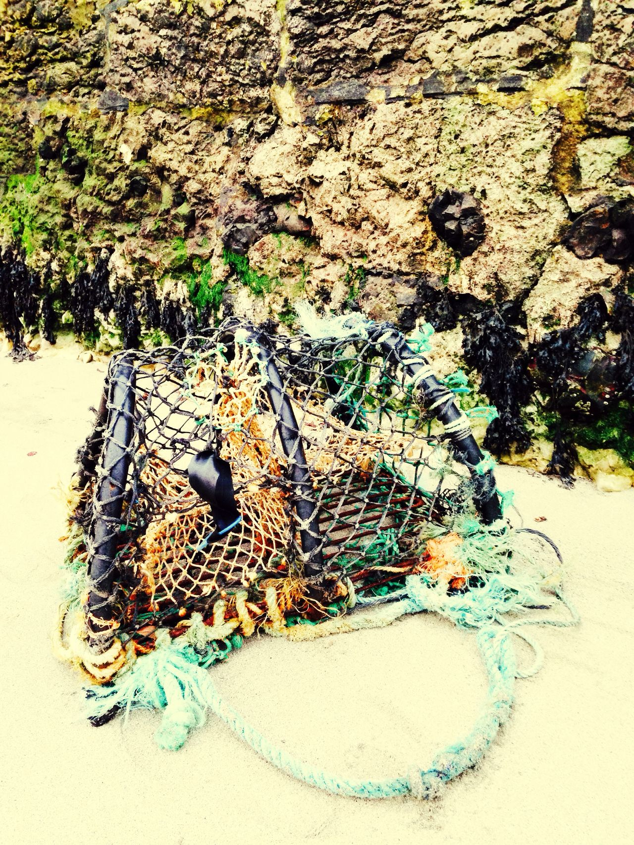 Lobster Pot Seaside Exploring Seaweed Harbour Wall Colour Splash Portmuck