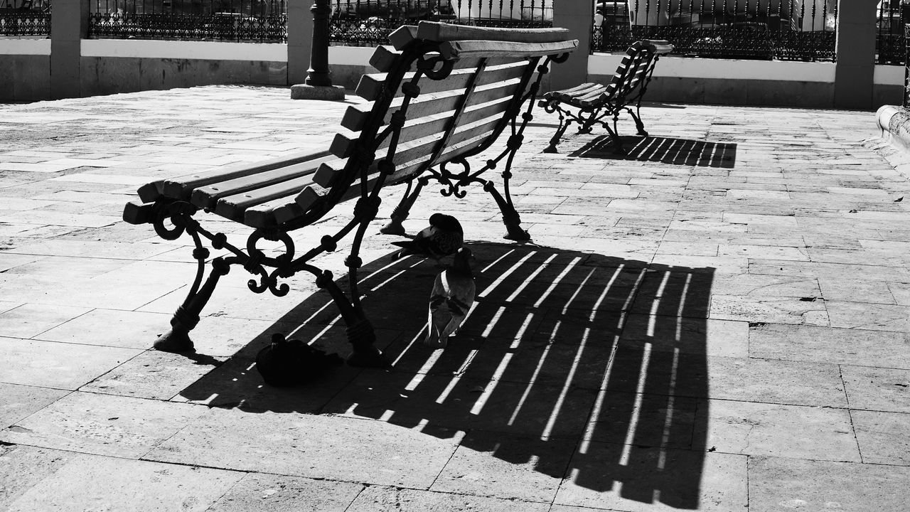 Shades Doves, Birds Bench Empty Shadow Absence Park Bench Tree Trunk Park - Man Made Space Paving Stone Day Outdoors No People Tranquility Footpath Black And White