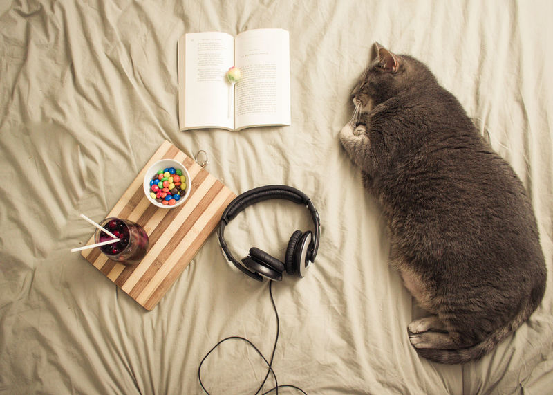 💖💖💖💖💖Here is the composition that I intended to present to you ... Without Nina, of course who decided to take a nap on the small objects ... to all the friends of Ee, I wish pleasant momentsEyeEm Selects Indoors  High Angle View No People Pets Mammal Day First Eyeem Photo Domestic Cat Pet Portraits Animal Themes Close-up Indoors  Domestic Animal City Gray Hair Food And Drink Music Books Cats Cat Relaxing The Week On EyeEm Bed Food