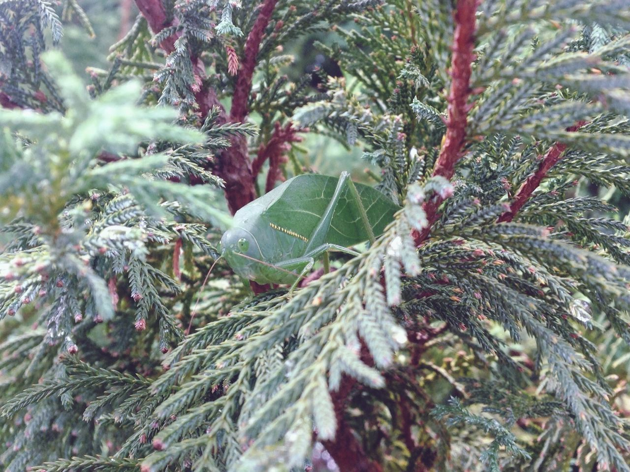 Esperança - camouflage Camouflaged Insect Tree Close-up Nature Outdoors Plant Beauty In Nature Cold Temperature EyeEmNewHere