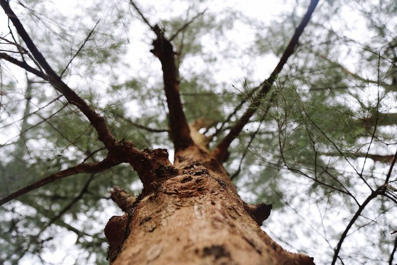 The Tree , Tree, Nature