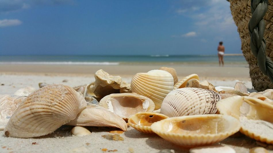 Beautiful stock photos of florida, Beach, Beauty In Nature, Close-Up, Day