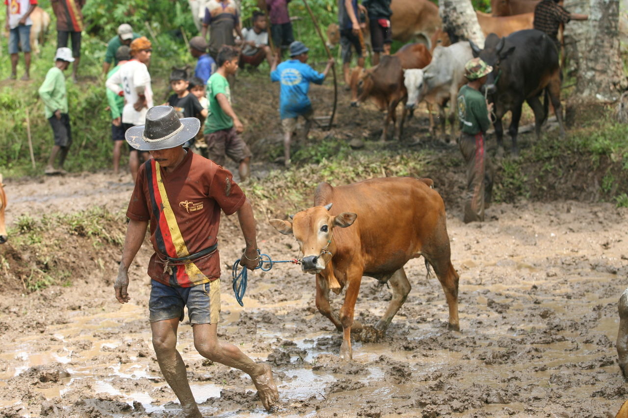 livestock, domestic animals, one animal, horse, mammal, cattle, agriculture, one person, cow, field, full length, real people, men, outdoors, day, adult, farmer, rural scene, occupation, one man only, people, nature, adults only, only men