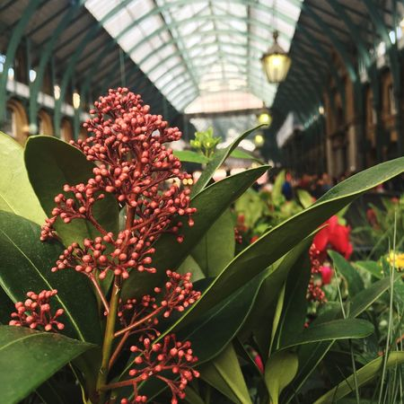 Flower Plant Freshness Growth Fragility Close-up Beauty In Nature Botany Selective Focus Nature Day Green Color Covent Garden  LONDON❤ Blossom London Focus On Foreground Springtime Houseplant In Bloom Horticulture Plant Life No People