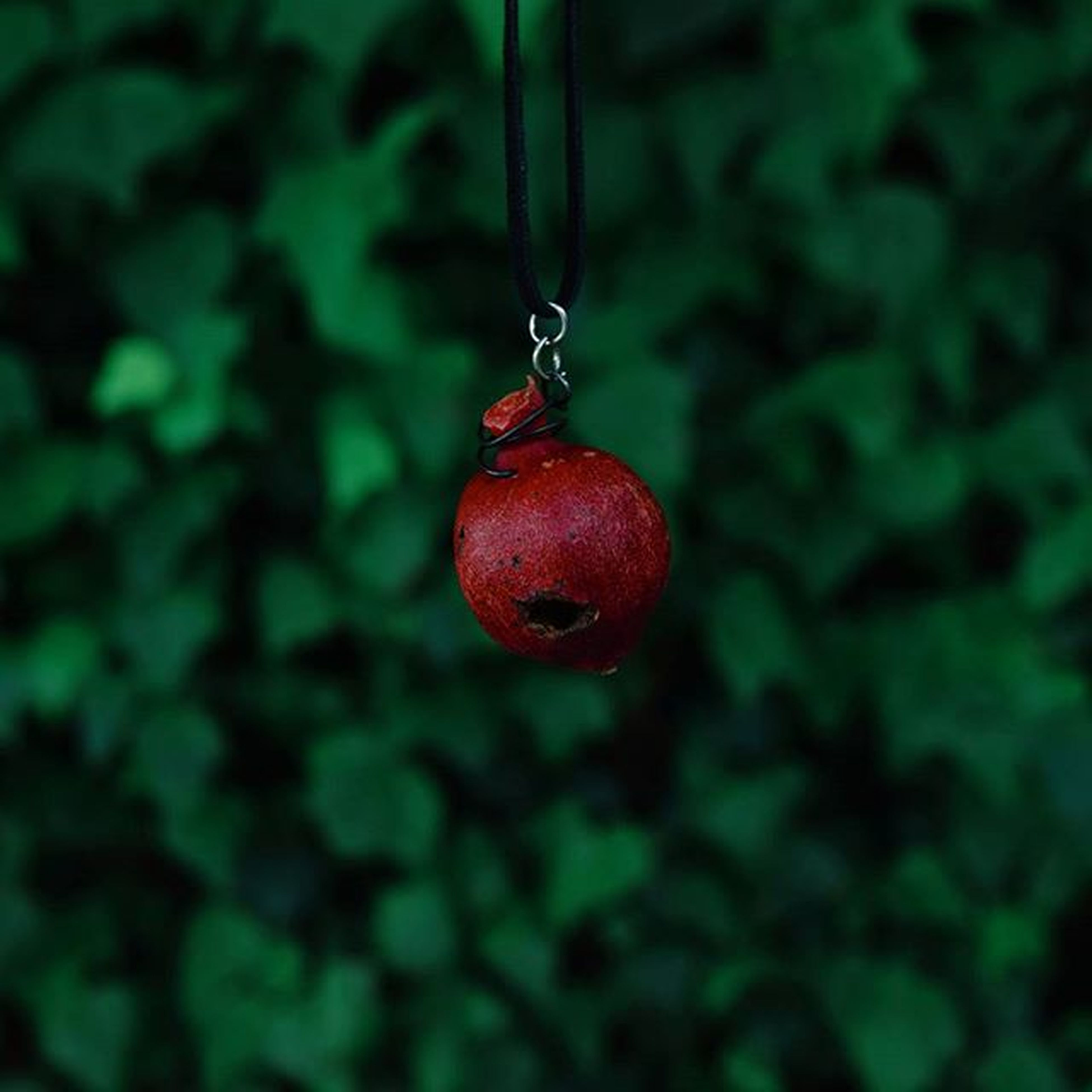 red, fruit, focus on foreground, close-up, hanging, tree, food and drink, selective focus, branch, animal themes, leaf, nature, food, no people, ripe, one animal, berry fruit, growth, day, outdoors