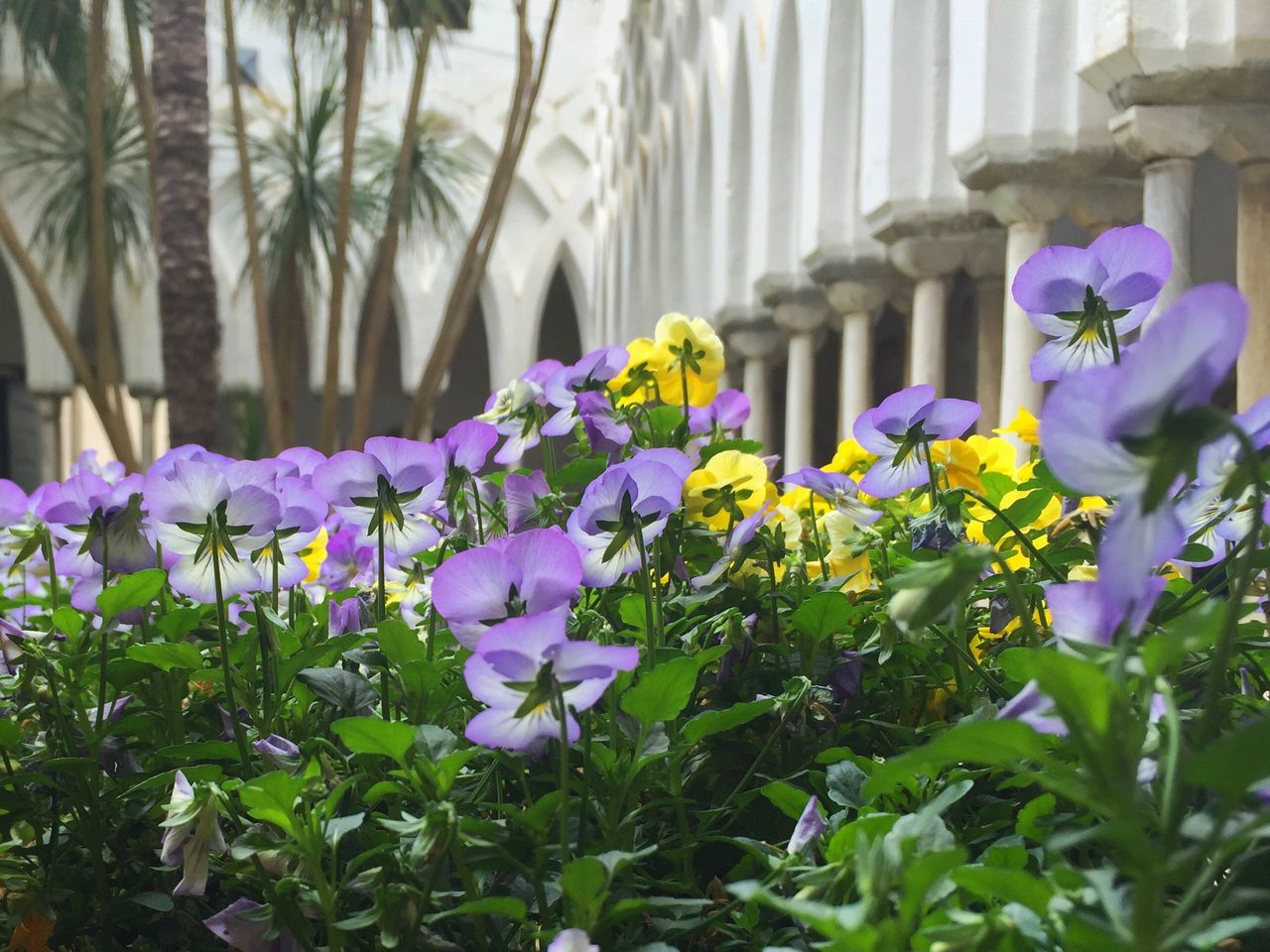 Tranquil courtyard inside Duomo in Amalfi. Amalfi Coast Duomo Di Sant'Andrea Cattedrale Di Sant Andrea Duomo Amalfi Purple And Yellow Flowers Garden View Purple And Yellow Complementary Colors