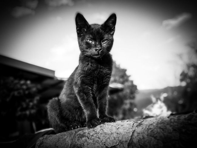 Muschio ❤ Cats 🐱 Monochrome Photography Black And White Blackandwhite Enjoying Life Love Cat Lovely Nature Pet Photography  Animal Themes Enjoying The Sun Ranch Beauty In Nature Pet Photography  Pets Domestic Cat