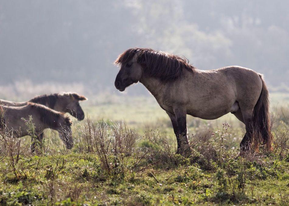 Beautiful stock photos of einhorn,  Animal,  Animal Themes,  Animals In The Wild,  Beauty In Nature