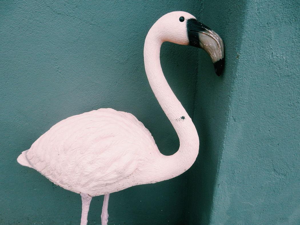 pink plastic flamingo Plastic Flamingos Flamingo Flamingo Gardens Pink Green Wall Showcase June My Year My View