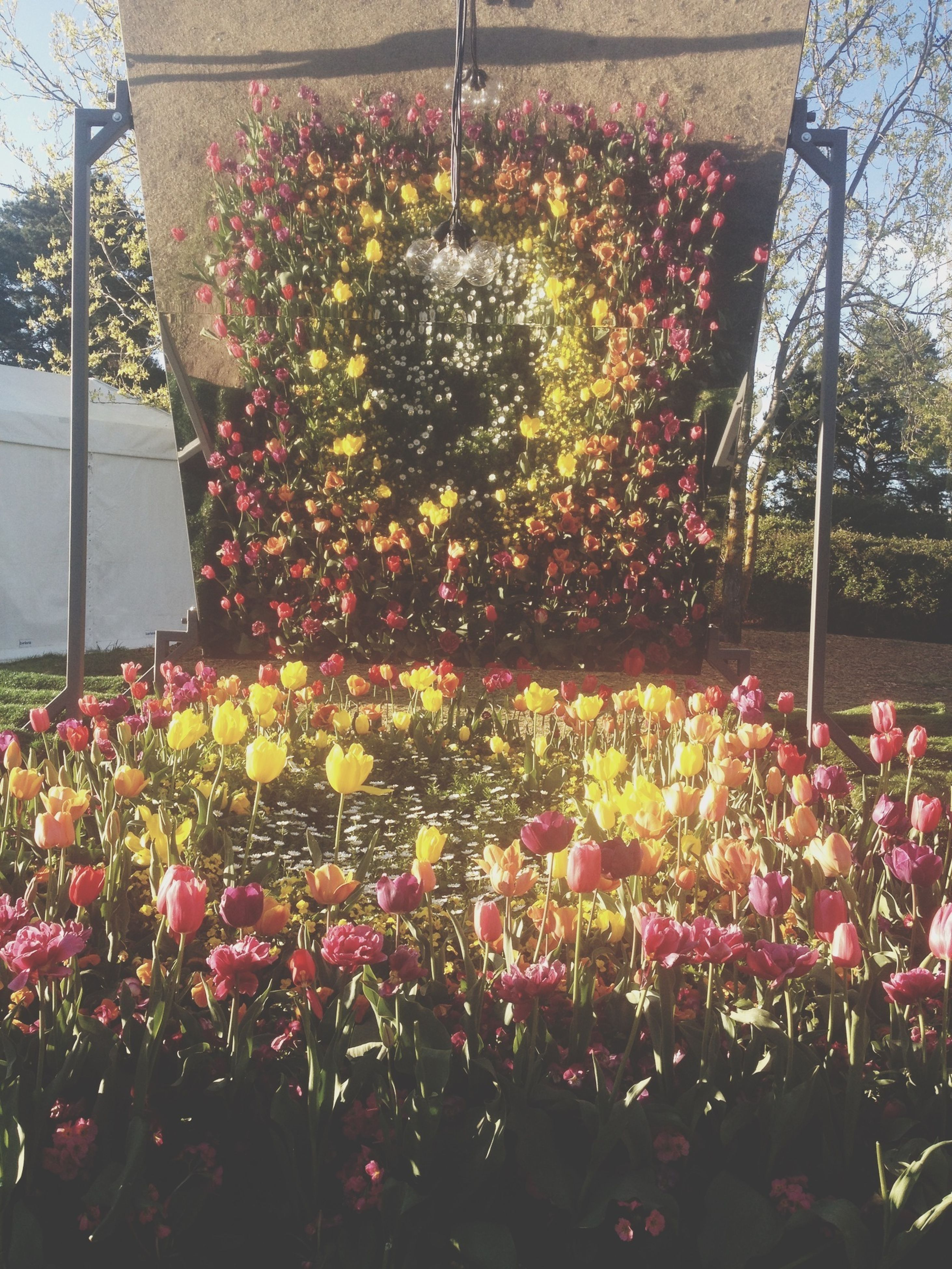 flower, freshness, abundance, fragility, decoration, plant, pink color, multi colored, growth, variation, built structure, outdoors, day, architecture, building exterior, nature, large group of people, potted plant, petal, celebration