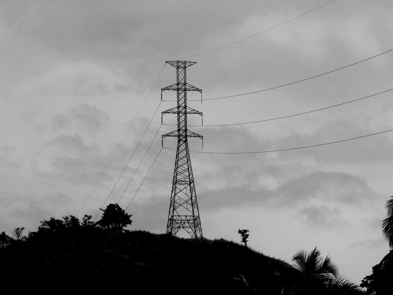 Black And White Tree Communication Connection Nature Technology Sky No People Low Angle View Outdoors Cloud - Sky Day Electricity Pylon Antenna - Aerial Nature Reserve