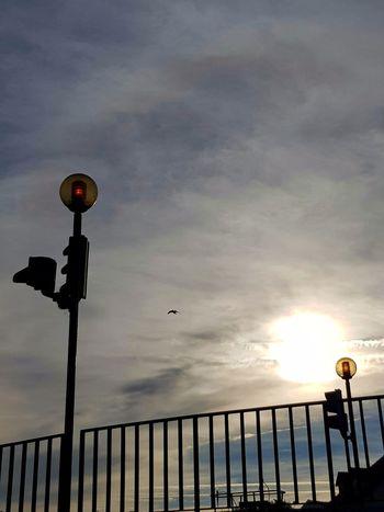 Sun Sky Bird Bridge Morning Light Leiria Portugal