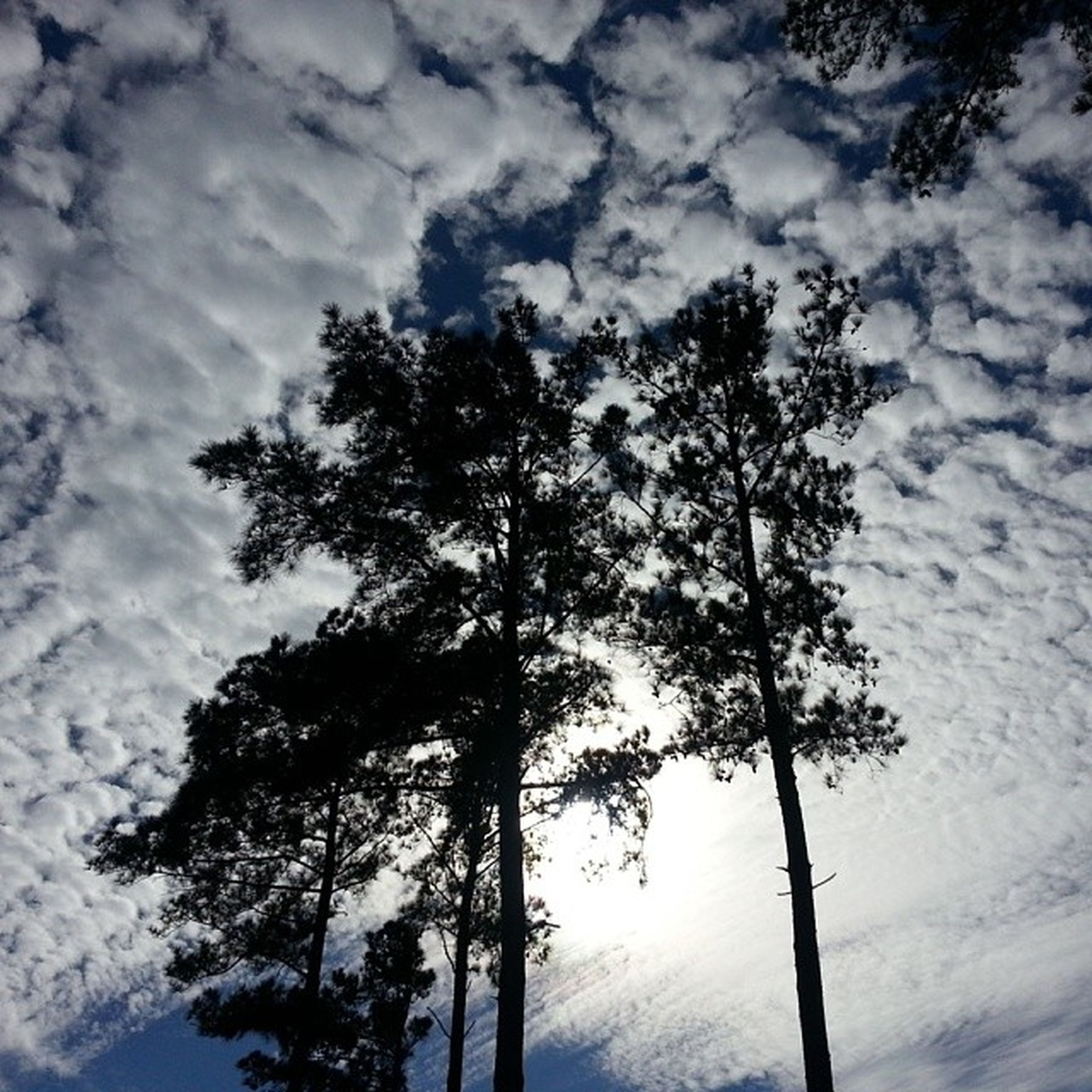 tree, sky, low angle view, tranquility, cloud - sky, beauty in nature, tranquil scene, nature, scenics, silhouette, cloudy, growth, tree trunk, cloud, branch, bare tree, weather, outdoors, no people, day