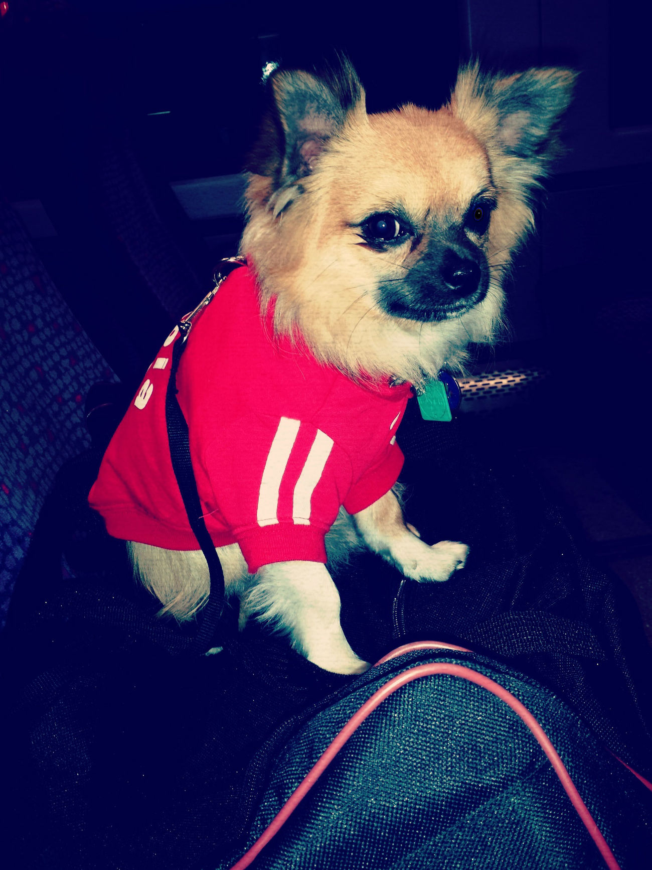 cool puppy in his huddy Cool Dude Puppy In A Hoody Rockingit Badboy